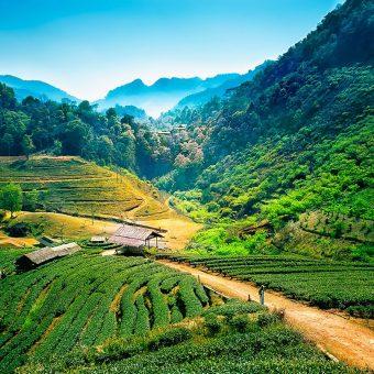 Chiang-Mai_Thailande